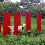 Kung fu geten på träningsläger i Kina 2013