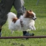 Zingo hoppar på ag-tävling, juni -14