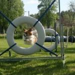Zepp hoppar genom däcket, maj -14