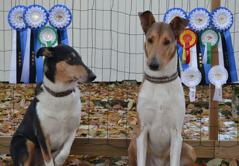 våra två nyblivna Estniska Champions