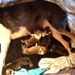 Nyfödda 4