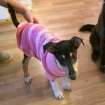 Meda i rosa klänning