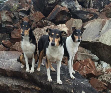 älskar den här bilden - där hundarnas & klippornas färger nästan är identiska