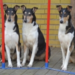 agility trio