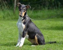 puppy Molly