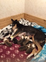 Molly & hennes nio valpar