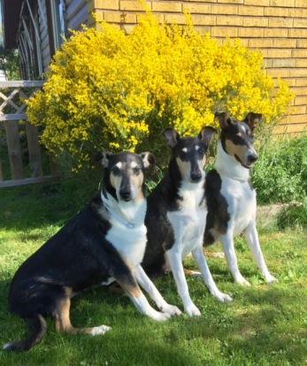 FREYJA, MOLLY & VERA vid vår vackra och väldoftande Ginst