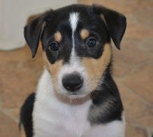 puppy Vera