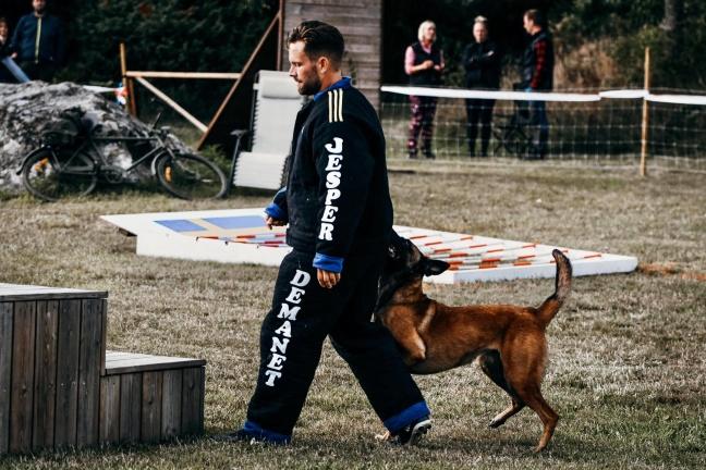 Hund: Daneskjold Plikta Foto: Carolina Sandberg