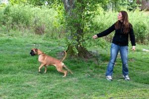 Är detta en hård metod? Hunden har halvstryp och den drar/rycker i kopplet. Vem är den utsatta, hund eller matte?