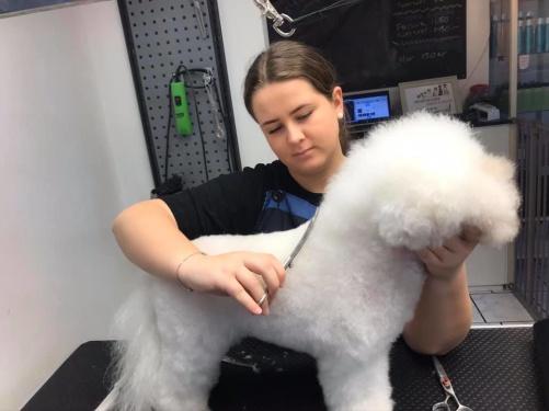Sofie med sin projekthund, Bichon Frise