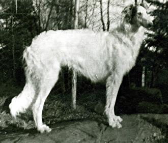 Unghund, kennel Ekhaga 1950-tal