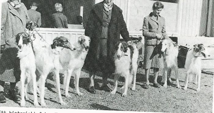 Uppfödargrupp SKK 1959. 5 kullsyskon med modern Ekhaga Roity till höger