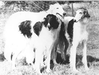 Ch Sadia of Whitelilies, Ch Ekhaga Rimski och Ch Ekhaga Piroschka