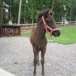 Vår lilla Perla född 2013