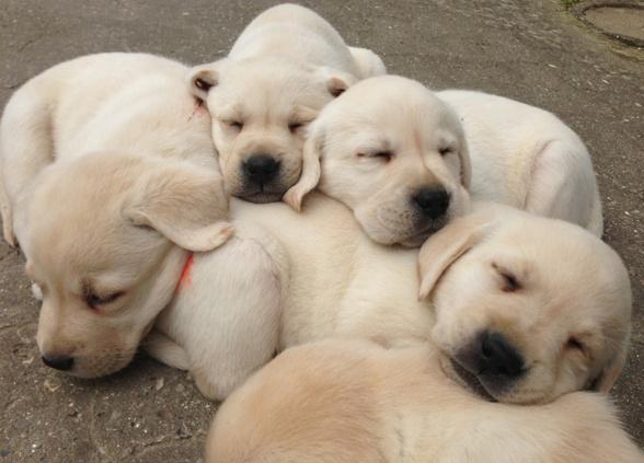 Trötta labbevalpar sover sött!