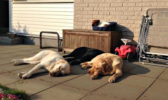 Morgonsolen vilar på vilande hundar.
