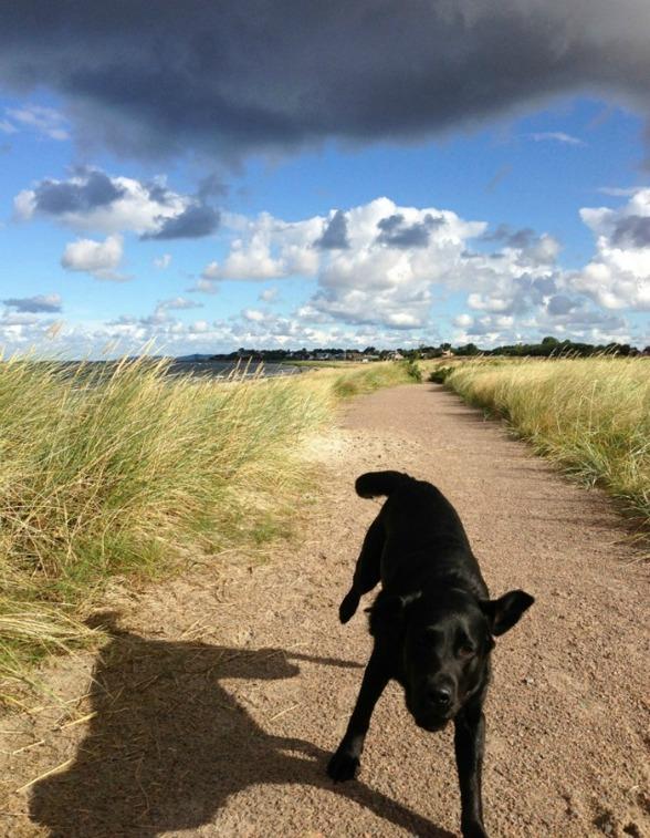 Yihaa! En kick av att börja dagens jobb med en promenad längs havet med glada hundar.