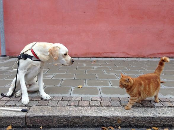 Pompe tittar på katten och inser att den inte är farlig.