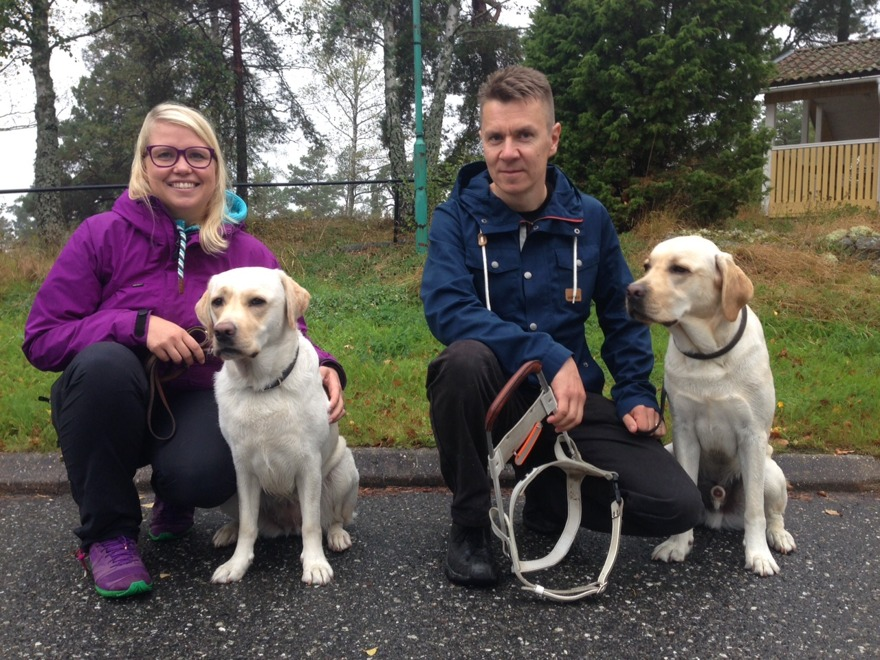DISA exporterar nu ledarhundar till Finland! Dressörer från Opaskoirakoulu hämtade gula labbarna Tessla (från Expose ledarhundar) samt Assar från DISA.