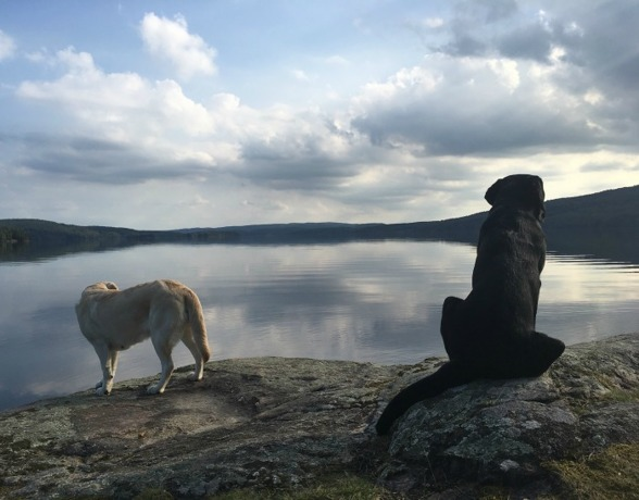 Keela och Ellie såg också ut att njuta av den fantastiska utsikten vid en sjö utanför Åmotfors.