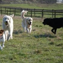 Umgås med andra hundar på rätt sätt