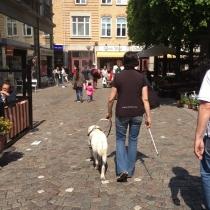 Träning av ledarhund pågår