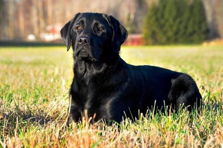 Stora valp- och unghundspaketet