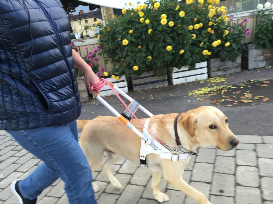 Guide dog Rex, also called the King.