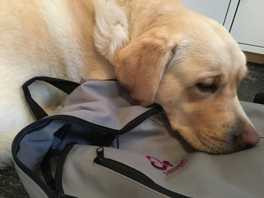 A service dog is a loyal helper for a person with a disability; you don´t need to wait for your personal assistant.