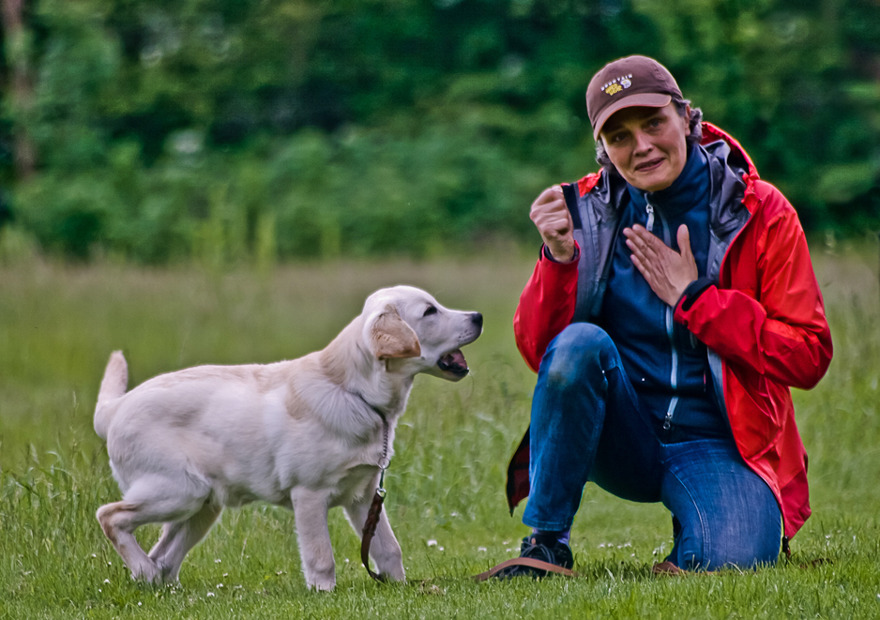 Anette working with a Labrador puppy.