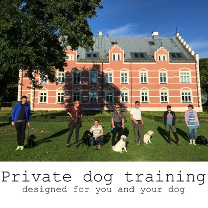 Private dog training - designed for you and your dog