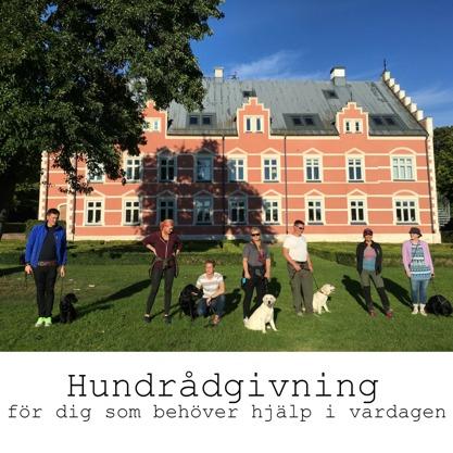 Hundrådgivning - för dig som behöver hjälp i vardagen. Bilden föreställer ett kurstillfälle med flera labradorer och människor framför ett rosa slott.