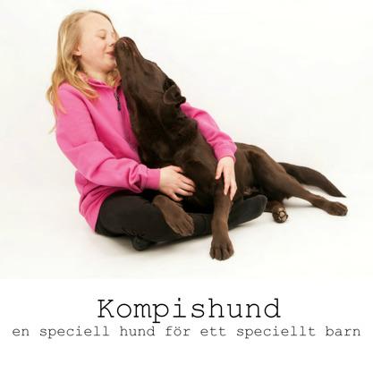 Kompishund - en speciell hund för ett speciellt barn. Bilden föreställer en flicka med en brun labrador i knäet som pussar henne.