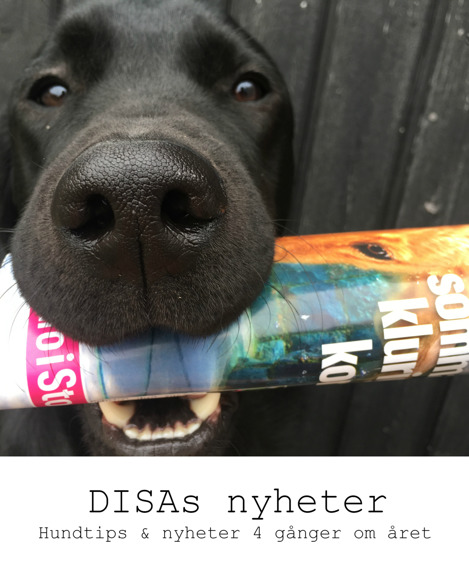 Få DISA's hundtips & nyheter 4 gånger om året! Svart labrador håller tidning i munnen.