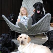 Hundarna i träning bor hos oss i familjen.