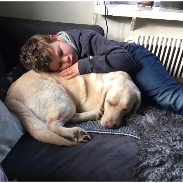En assistanshund betyder mer än vad man kan ana! På bilden syns en gul labrador som betyder allt för en pojke.