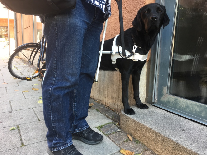 Man with black Labrador in guide dog harness.