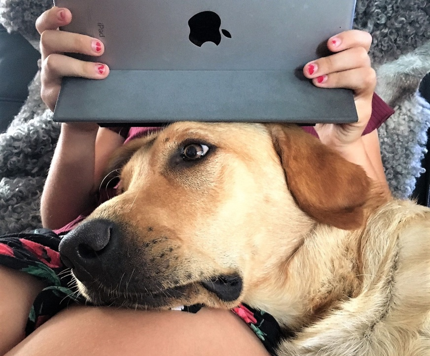 A girl and her yellow Labrador with his head on her lap. The girl has an Ipad leaning on his head.