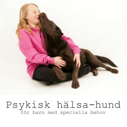 Psykisk hälsa-hunden - en speciell hund för ett speciellt barn. Bilden föreställer en flicka med en brun labrador i knäet som pussar henne.