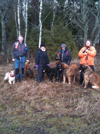 16 feb 2014, var det ett härligt gäng som gick skogspromenad i 7 km med spårning och fikapaus. 4 timmar senare vara både hundar och ägare nöjda.