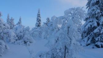 Snowrider Weekend 31/1 - 3/2