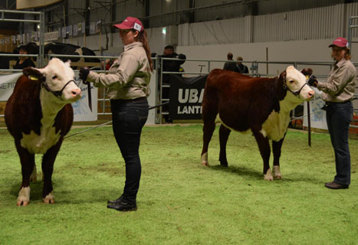 Systrarna i Topp i SM i Showmanship. Miranda (till höger)  1a och Annika 2a! Miranda visar 7339 Bårarps Amory.