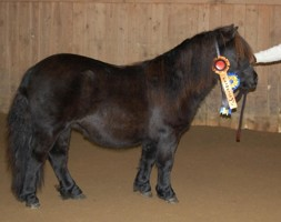 Bårarps California Champion Ungsto! 98798= 41p