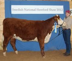 Miranda vann SM i Hereford Showmanship med Tracy som även blev Reserv Champion junior hondjur