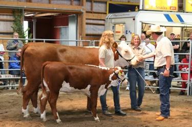 Domaren Ian Harvie, Kanada gratulerar mig. 1647 Munka Katie ET blev Supreme Champion på SNHS 2008. Hennes kalv, 7196 BPH Katie vann även sin klass.