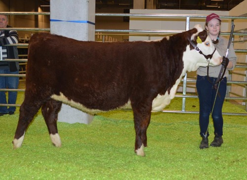 7338 Bårarps Catalina came 3rd in her class. We are very proud of our daughter, Christel, who washed and fitted the heifer all by her self.