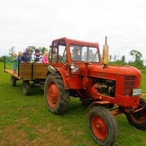 Ko- & hästsafari med traktor & vagn