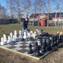 Schack med getterna