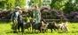 Hälsa på djuren i parken